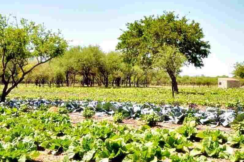 La agroecología una alternativa que salvaguardaría la salud frente a una nueva pandemia.
