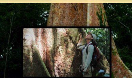 Fichas de identificación de especies forestales maderables y silvicultura tropical
