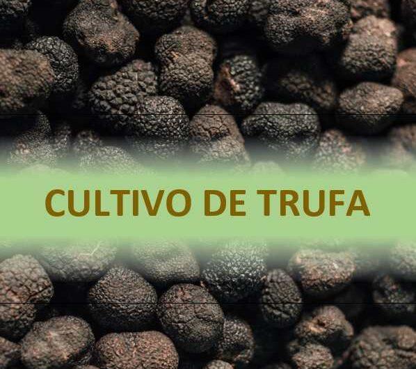 Cultivo de Trufa – «Documento de Aprendizaje»