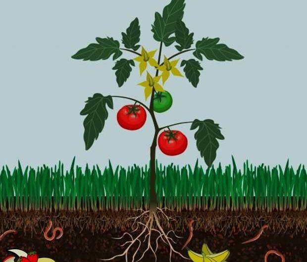 Manual: Elaboración, uso y manejo de abonos orgánicos