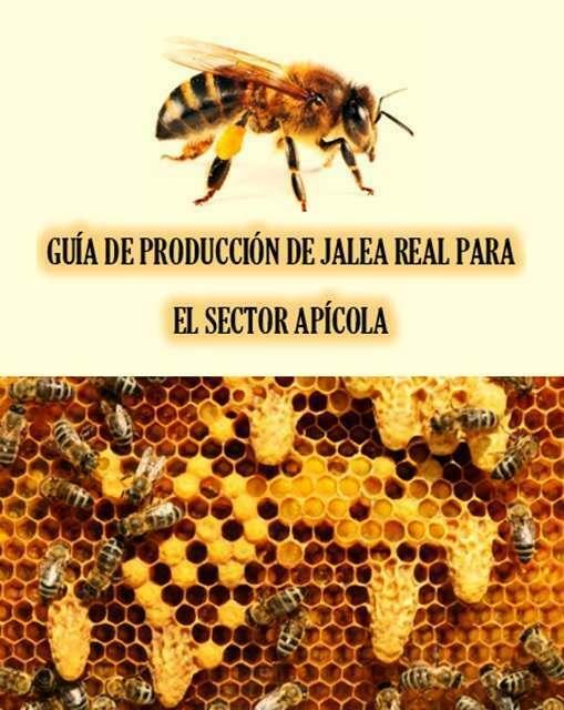 GUÍA DE PRODUCCIÓN DE JALEA REAL PARA EL SECTOR APÍCOLA